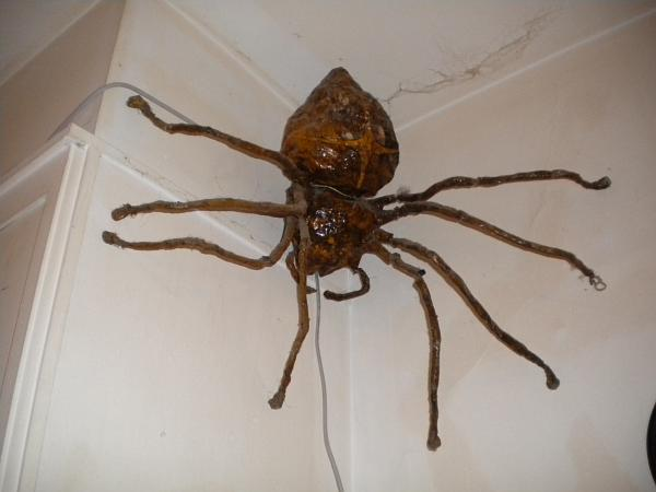 Australian House Spiders